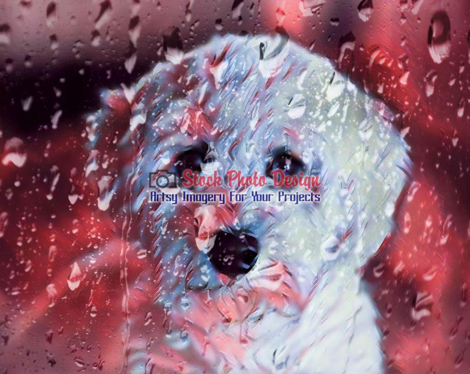 Cute Doggy Behind a Wet Windows