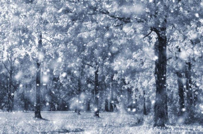 Snowy Forest Wallpaper 01