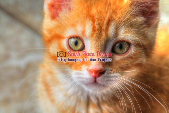 Cute Kitty Cat in HDR